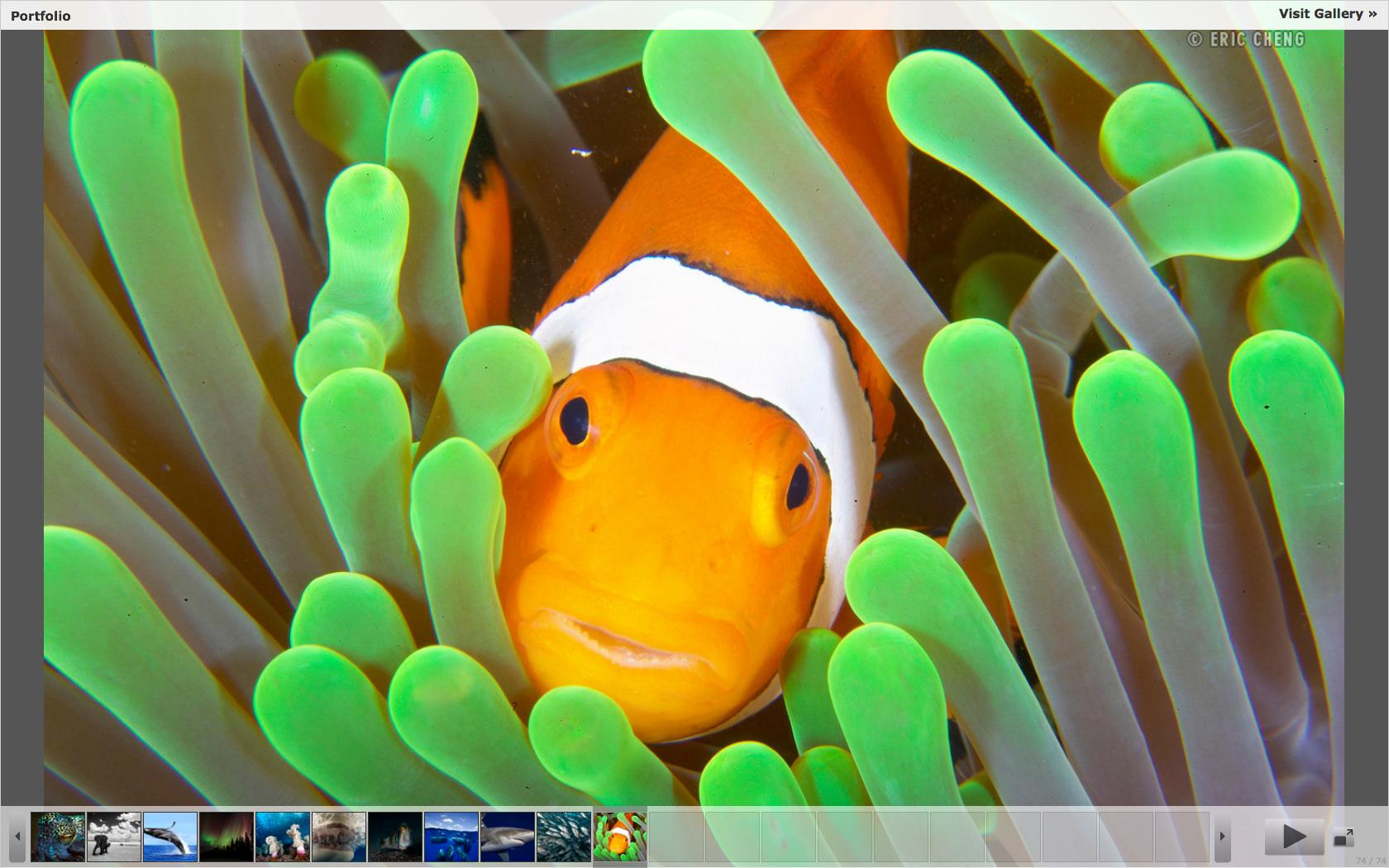 Как сделать чтобы в clownfish
